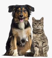 cat and dog sitter Glastonbury, CT