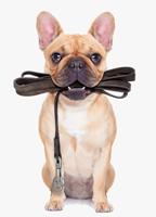 Glastonbury dog walker