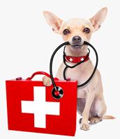 pet first aid class Glastonbury
