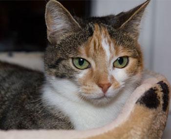 cat sitter Glastonbury